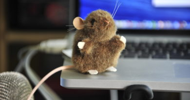Photo, Toy Mouse on Computer